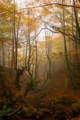 Criaturas del bosque (Alfredo.Ruiz) Tags: canon otoño bizkaia niebla hayedo polarizador ef1740 orozko eos6d alavavision belaustegi