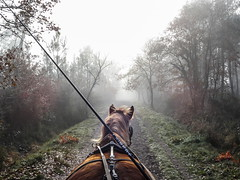 Trotte, trotte, ma jument..... (Isabelle Gallay) Tags: wood trees horse mist tree nature animal misty fog forest cheval sony foggy brouillard chemin fort bois brume aquitaine gironde attelage