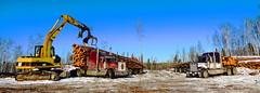 Rempel loads (jr-transport) Tags: trees cat long logs hood logger loader peterbilt kenworth largecar 379 w900 w900l 379l extendedhood