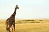 Girafe (dumuphoto) Tags: girafe safari