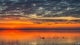 Geese on the Grevelingen lake