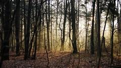 Misty morning (pszcz9) Tags: polska poland przyroda nature natura las forest forestimages pejzaż landscape poranek morning mgła fog mist drzewo tree grudzień december beautifulearth sony a77