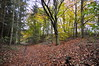 Copper carpet (petefreeman75) Tags: trees leaves autumn woods woodland beech firs