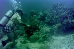 n0005.03 (avaragado) Tags: barbados coralreefclub fd197504 fd197604 fd197905 n0005 tonysmith
