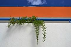 Farn (Mauerkind Berlin) Tags: outdoor pflanze grün farn geländer himmel balkone