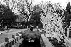 The bridge (Go-tea 郭天) Tags: jinanshi shandongsheng chine cn street urban city outside outdoor people bw bnw black white blackwhite blackandwhite monochrome asia asian china chinese canon eos 100d 24mm prime shandong jinan baotu springs bridge water trees winter cold woman young crossing cross through rocks harmony old traditional beautiful beauty bag coat alone lonely quite relax from to channel