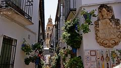 DSC01460-Cd las Flores Cordoba (dreptacz) Tags: cordoba hiszpania kwiaty ulica miasto lustrzanka sony slt widok wieża