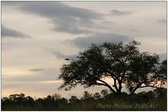 DSC08726PJ_XNV (http://phj.bookfoto.com/) Tags: botswana afrique okavango philippe jubeau delta