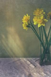 Spring Indoors