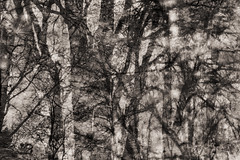 Puddles (Multiple Exposure) 93 (pni) Tags: monochrome tree reflection ice water puddle multiexposure multipleexposure tripleexposure lapinlahti lappviken helsinki helsingfors finland suomi pekkanikrus skrubu pni