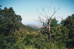 So pure (DavidSmolik) Tags: pure white old tree nature landscape lifestyle photography travel wanderlust wandering gratteri sicily italy vintage grain mood moment fujifilm xt10 samyang 21mm