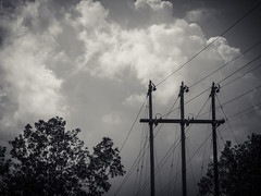 monochrome power (jojoannabanana) Tags: trees blackandwhite monochrome lines silhouette clouds cloudy driveby powerlines wires canonpowershot s100