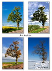 Les 4 saisons (didier95) Tags: automne hiver ciel normandie paysage arbre printemps ete saison les4saisons fabuleuse