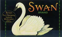 "Swan Black • <a style=""font-size:0.8em;"" href=""http://www.flickr.com/photos/136320455@N08/20849030304/"" target=""_blank"">View on Flickr</a>"