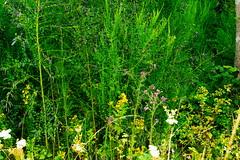 (vieubab) Tags: nature branches arbres fort bois verdure feuillage