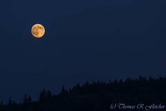 Highland Moon (travelphotographer2003) Tags: usa moon black detail nature ecology night cutout dark highlands solitude glow bright space satellite luna fullmoon sphere westvirginia crater serenity moonlight astronomy nightsky universe lunar heavenly orbit appalachia cosmos isolated celestial appalachianmountains alleghenymountains perigee sturgeonmoon grainmoon greencornmoon supermoon