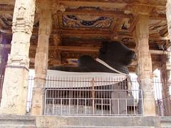 The Big Temple (4): The Nandi (v s raam (on/off)) Tags: india tower architecture temple big guard lord unescoworldheritagesite unesco mount temples vehicle nandi shiva gigantic chisel thanjavur siva lingam tamil tamilnadu raja gatekeeper largest nadu shikara sikhara chola kovil tanjore monolithic bigtemple lordshiva vimanam shikhara sanctorum lordsiva rajarajachola vahana vimana peruvudaiyar mahalingam santum sikara brihadeeswarartemple brihadeeswarar rajarajacholai rajarajeswaram greatlivingcholatemples peruvudaiyarkovil cholai garbhagriha rajarajeshwaratemple rajarajeshwara