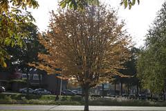 Floriade_251015_30 (Bellcaunion) Tags: park autumn fall nature zoetermeer rokkeveen florapark