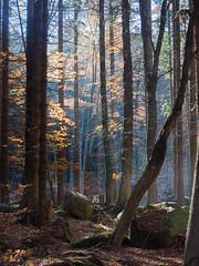 Herbstliches Ilsetal (3) (Teelicht) Tags: autumn fall forest germany deutschland herbst wald harz tal herbstlaub ilsetal sachsenanhalt
