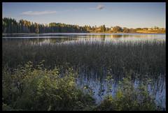 Metabones 28 mm View #2 (Krogen) Tags: autumn norway norge norwegen akershus høst romerike krogen ullensaker nordbytjernet speedbooster omzuiko28mm28 metabones sonya6000