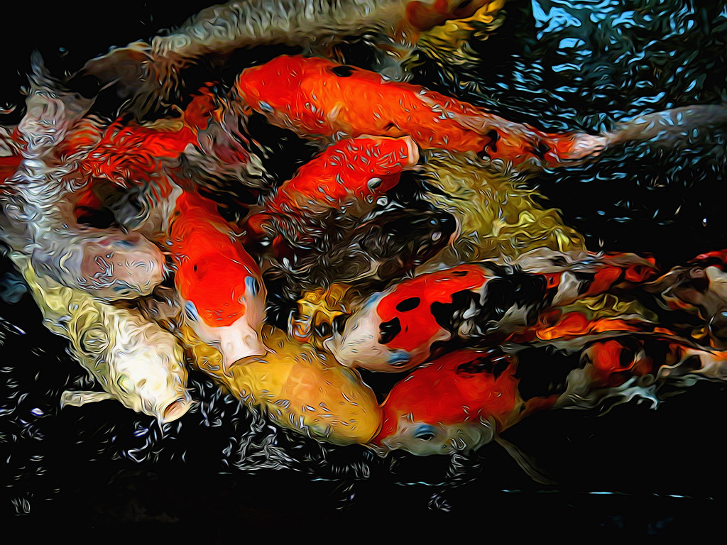 The World\'s Best Photos of color and fishes - Flickr Hive Mind