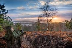 Miss Tickle (Kimberley Hoyles) Tags: tree trees green wildlife nat sunrise super suny sun morning frosty water drops landscape beautiful beaty perrywood stunning pretty hill high lookingdown grass bushes wonderful nikon