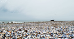 Happiness (mfernandez.1992) Tags: lapaloma la paloma labalconada playalabalconada playa balconada faro beach dog sky nikon uruguay rocha 1855mm 1855 lightroom presets
