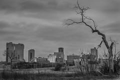 The Dead Tree (Everett Szurek) Tags: tree fort worth texas trinity river fortworth black white city skyline cloudy cityscape dead winter cold dark everett szurek photo january dfw dallas