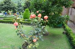 DSC_7583 (rushmurad) Tags: kahmir india dal lake kashmiri