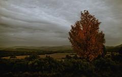 (toni jara) Tags: nature green serenidad paisaje montaña cielo airelibre árbol otoño invierno rubielos mora gudar romántico luz teruel