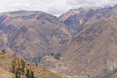 Pola uprawne w dolinie Colci | Corn fields in the Colca valley