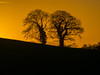 The Twin Trees (RS400) Tags: sun set cool wow amazing wicked orange yellow landscape love olympus zoom lens len tree trees black sky light golden hour uk england south west bristol wild