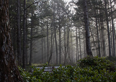 Cape Lookout State Park (TheColorsBleed) Tags: beauty cape kiwanda lookout state park oregon coastal ocean waves fog coast forest sea pollution mist seagreen nature seagulls sunset seagrass reflections pacificnorthwest pacific pnw north west lightbeams northwest dusk beams light
