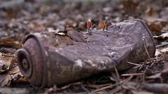 Waste - Müll (2) (david_drei) Tags: preiser minis müll waste h0