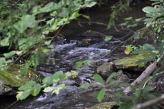 DSC_5425 (Nikolay.Shulga) Tags: franklloydwright fallingwater 20130718fallingwater