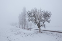 Winterstille (SonjaS.) Tags: nebel schnee winter foggy haze kalt gefrohren could land canon6d sigma24mm14 wow