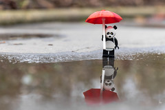 Panda reflection (Ballou34) Tags: 2017 7dmark2 7dmarkii 7d2 7dii afol ballou34 canon canon7dmarkii canon7dii eos eos7dmarkii eos7d2 eos7dii flickr lego legographer legography minifigures photography stuckinplastic toy toyphotography toys neuillysurseine îledefrance france fr stuck plastic panda reflection water puddle umbrella red rain
