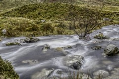 Wet tree (GarethBell) Tags: carneddau wales water flowing hdr tree wet cloudy rocks grass hills branch outdoors outside mountains northwales gwynedd canon canon6d 6d 35mm