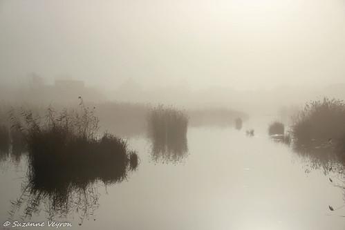 Réserve naturelle de la Motte (Lieusaint, Seine et Marne)