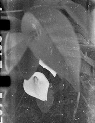 Calla palustris (Minimal Cinema) Tags: bw motion film kodak picture 16mm d23 7219 kiev30 500t vision3