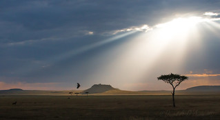 Transcendent Tanzania 5233
