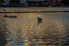 SALMON WEIR AREA GALWAY [RIVER CORRIB] REF--107573