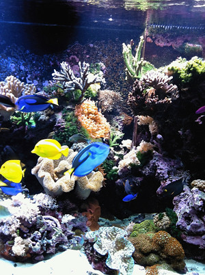 Educational 500 gal. Reef - New Bedford Oceanarium - MA - 2
