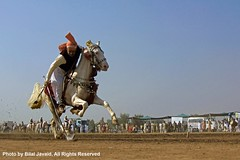 Tent Pegging in Punjab , Pakistan 1- Photo by Bilal Javaid