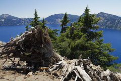 Crater Lake, Oregon (Anna Calvert Photography) Tags: trees summer mountains nature oregon landscape volcano nationalpark crater craterlake volcanic wizardisland southernoregon
