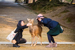 Selfie with Nara celebrity (koalie) Tags: girls vacation people animal japan deer jp nara selfie tdaiji naraken narashi 201502japan