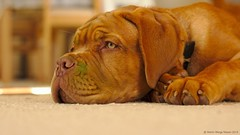 A little green (Martin Werge Nissen) Tags: animal dof 169 maximus canon50mm18 doguedebordeaux