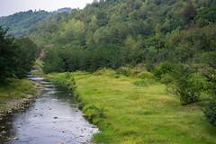 La rivire est le pouls de la nature (- Ali Rankouhi) Tags: tree fall river stream iran gilan     2015 1394    rankouh ranekouh