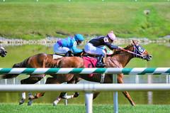 2015-08-23 (90) r6 Roimes Chirinos on #8 Gator Boy (JLeeFleenor) Tags: photos photography md marylandhorseracing marylandracing jockey   jinete  dokej jocheu  jquei okej kilparatsastaja rennreiter fantino    jokey ngi horses thoroughbreds equine equestrian cheval cavalo cavallo cavall caballo pferd paard perd hevonen hest hestur cal kon konj beygir capall ceffyl cuddy yarraman faras alogo soos kuda uma pfeerd koin    hst     ko  chestnut maryland
