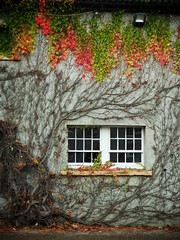 Autumn at Castle Ward (Feldore) Tags: old autumn ireland red house building castle fall window leaves wall colours scenic ivy panasonic ward northern mchugh strangford em1 35100mm feldore